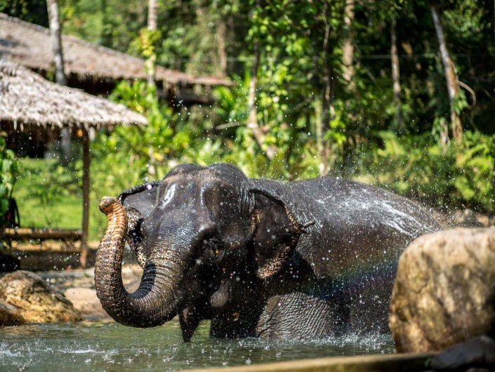 Ethical elephant tour
