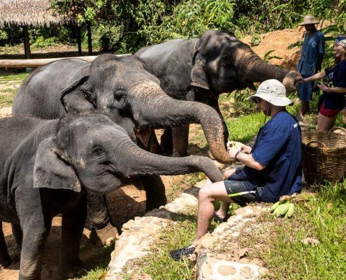 Elephant feeding tour