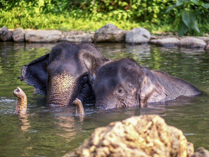 Females bathing