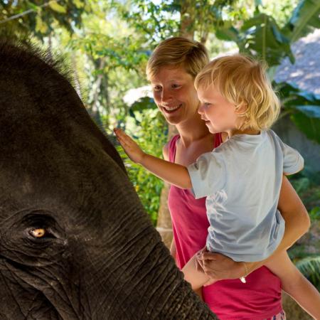 Elephant family experience