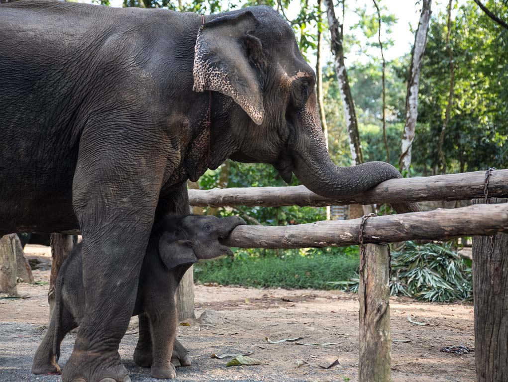 Elephant welfare Thailand