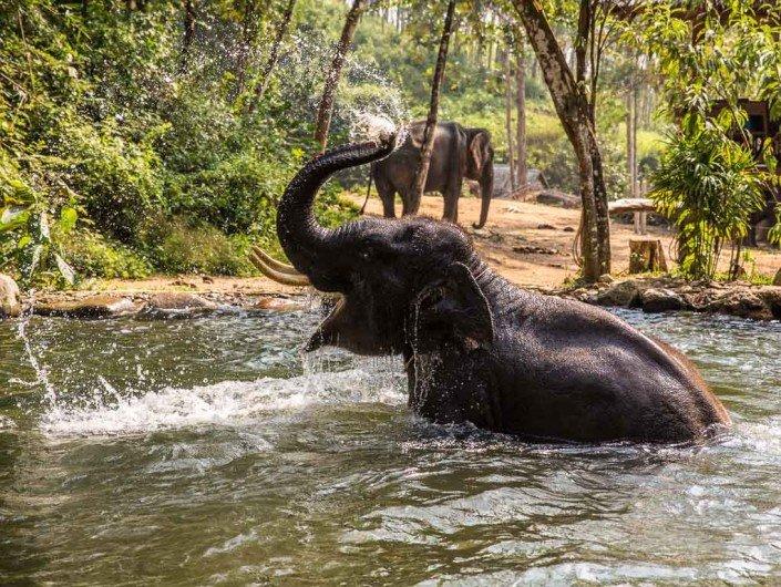 Ethical elephant interaction