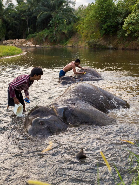 Elephant washing Thailand