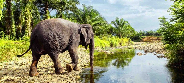 Elephant tour Thailand