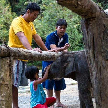 Baby elephant interaction