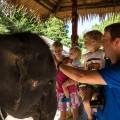 Family elephant interaction