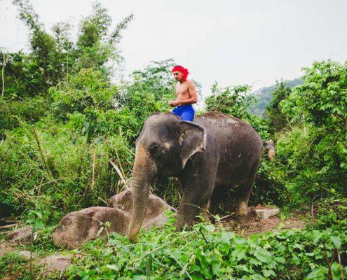Elephant & Mahout