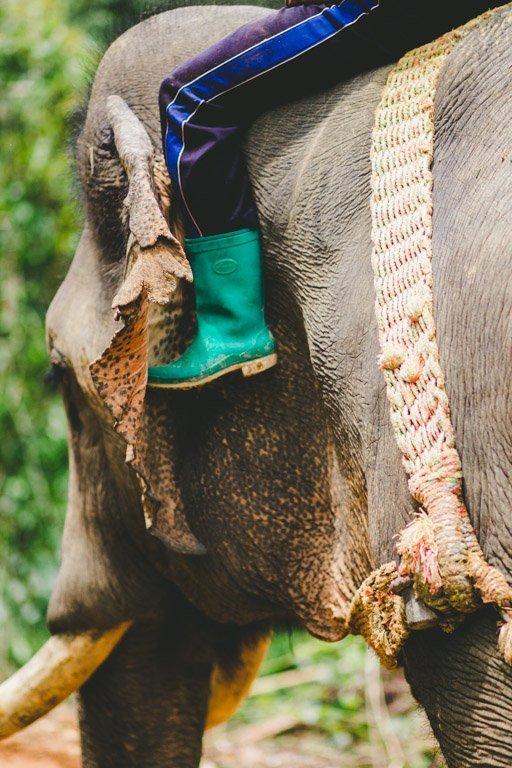 Elephant Logging